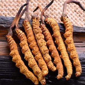 冬虫夏草既可入药,更是食疗圣品