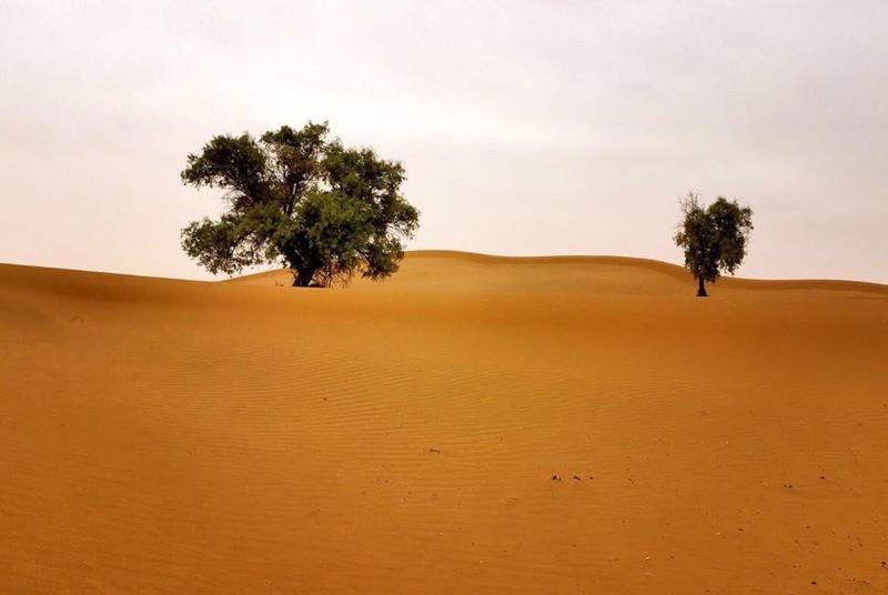 沙漠徒步旅
